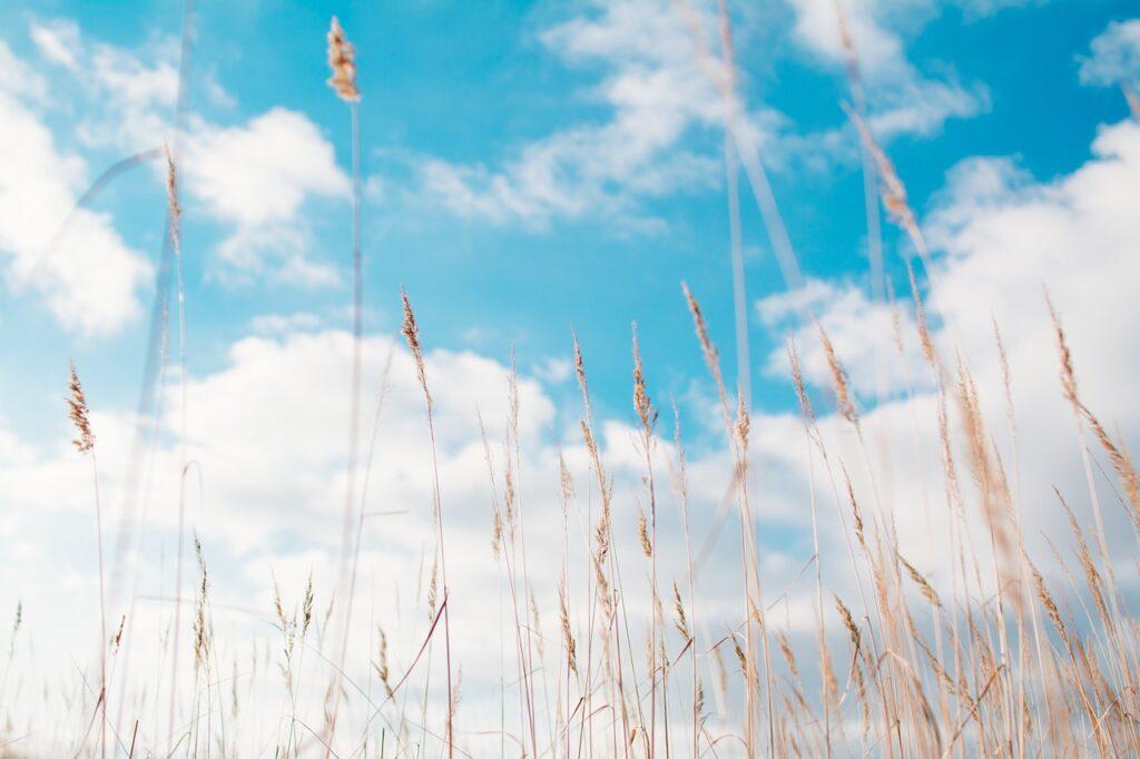 gras, hay, summer